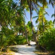 Pathway in tropical jungle — Stock Photo