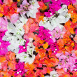 Petals of flowers background — Stock Photo