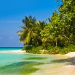 Tropical jungle and beach — Stock Photo #4219794