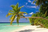 Bending palm tree on tropical beach — Stock Photo