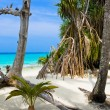 Trees on tropical beach - Stock Photo