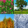Stock Photo: Four seasons (my photos)