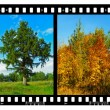 Nature seasons in film frames (my photos) - 图库照片