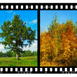 Nature seasons in film frames (my photos) - Stok fotoraf