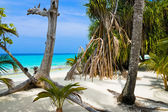 Trees on tropical beach — Stock Photo
