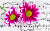 Flowers on sheet music — Stock Photo
