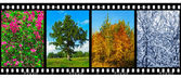 Nature seasons in film frames (my photos) — 图库照片