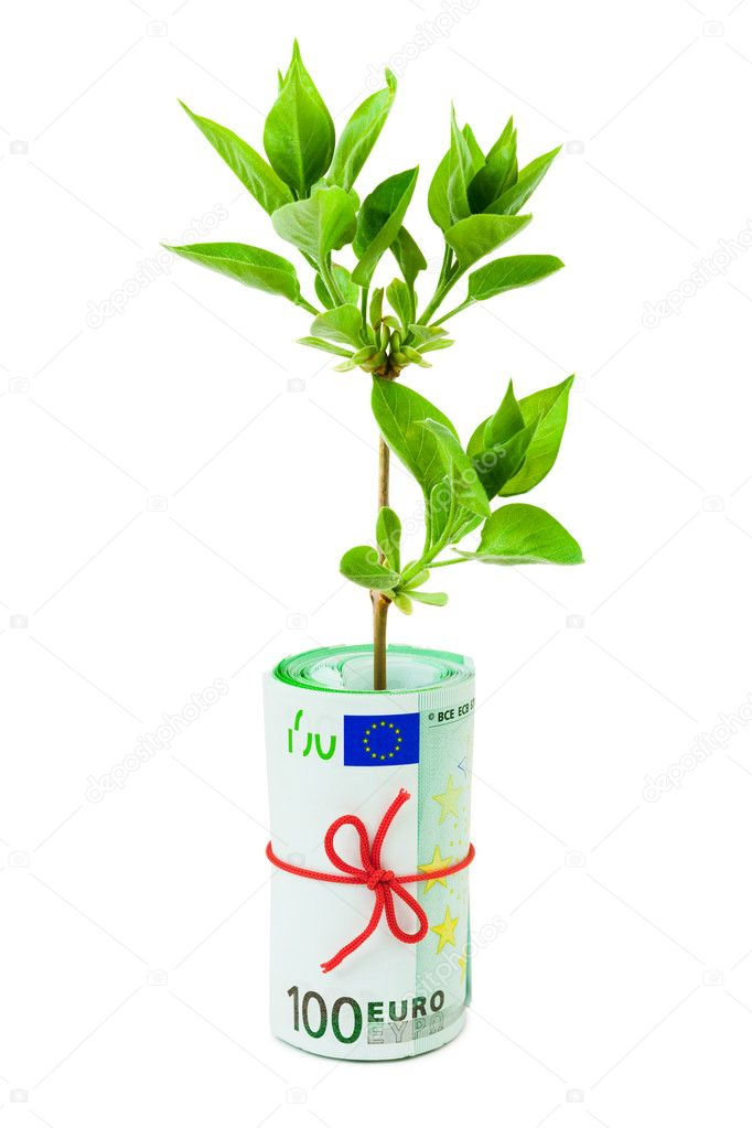 Roll of money and plant isolated on white background — Stock Photo #4233429