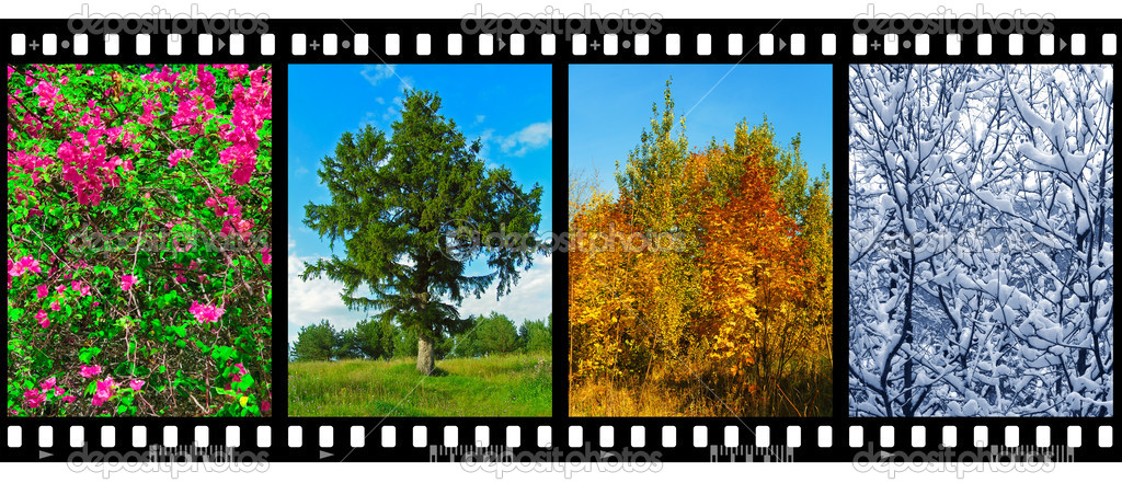 Nature seasons in film frames (my photos) isolated on white background — Stock Photo #4239184