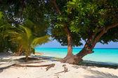 Tree on tropical beach — Stock Photo