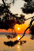 Pine tree branch and sunset — Stock Photo