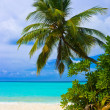 Bending palm tree on tropical beach — Stock Photo