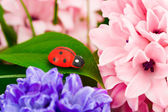 Toy ladybug and flowers — Stock fotografie