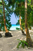 Pathway to tropical beach — Stock Photo