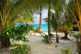 Trees on tropical beach — Stock Photo