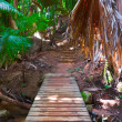 Pathway in jungle, Vallee de Mai, Seychelles — Stock Photo #4277808
