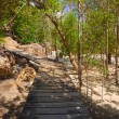 Pathway in jungles - Stock Photo