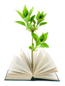 Book and plant — Stock Photo