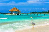 Heron on a beach — Stock Photo