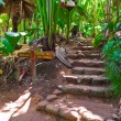 Pathway in jungle, Vallee de Mai, Seychelles - 
