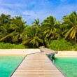 Jetty, beach and jungle - 