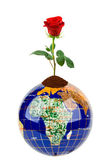 Globe and rose flower — Stockfoto