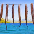 Octopus hanging to dry — Stock Photo