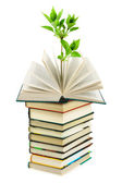 Books and plant — Stock Photo