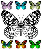Butterfly vector template — Vettoriale Stock