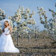 Bride in blossom — Stock Photo