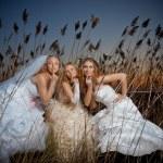Evening brides — Stock Photo #2767958