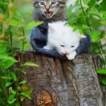 Постер, плакат: Kittens
