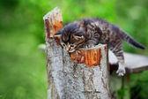 Funny little kitten — Stock Photo