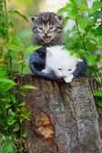 Gattini — Foto Stock