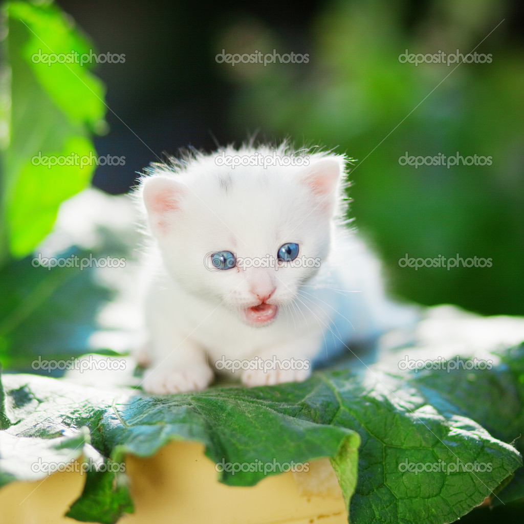 Small funny white kitten outdoor in the garden — Stock Photo #2768624