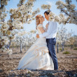 Spring wedding - Stock Photo