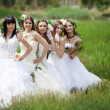 Brides — Stock Photo