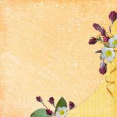 Pozadí pro kartu blahopřání — Stock fotografie