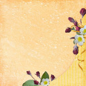 贺卡的背景 — 图库照片
