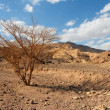 Desert landscape with dry acacia tree - Stock Photo