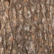Pine tree bark texture — Stock Photo #2753792