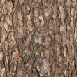 Pine tree bark texture - Stock Photo
