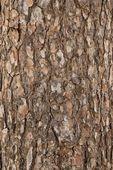 Texture corteccia dell'albero di pino — Foto Stock