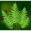 Stock Vector: Fern
