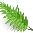 Stock Vector: Fern leaf