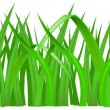 Stock Vector: Grass