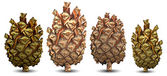 Four pine cone — Vector de stock