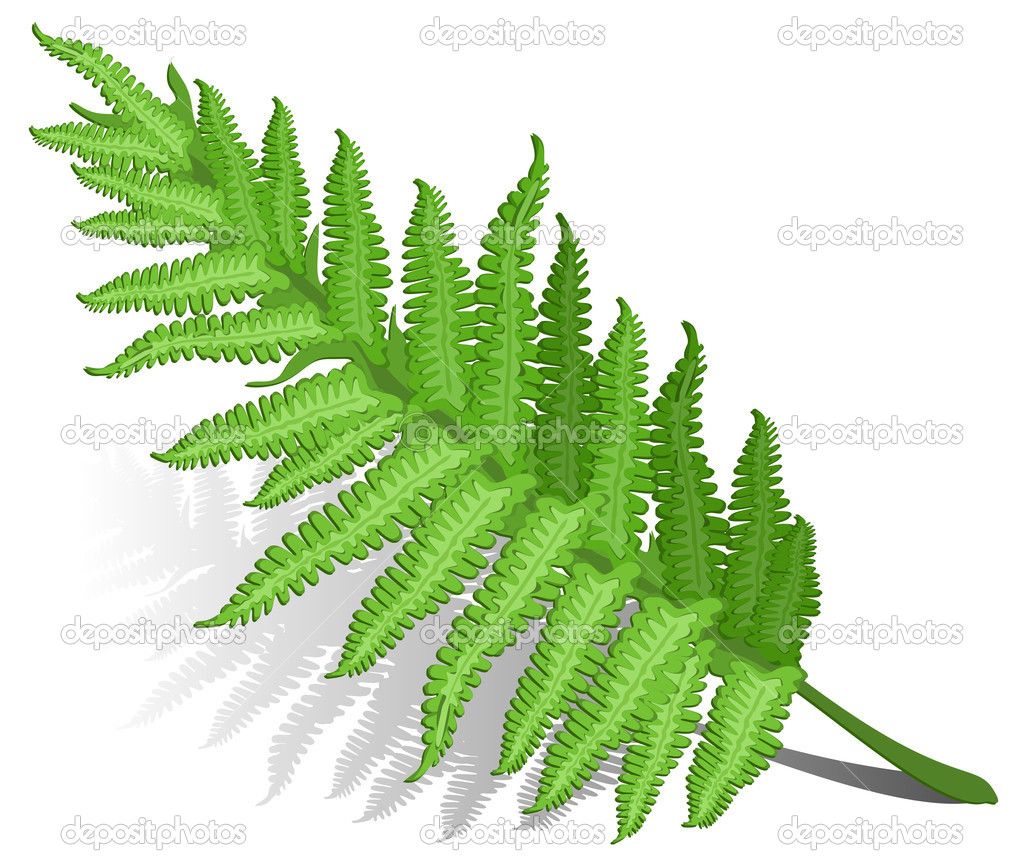 Single fern leaf isolated on white background , vector illustration — Stock Vector #2767862