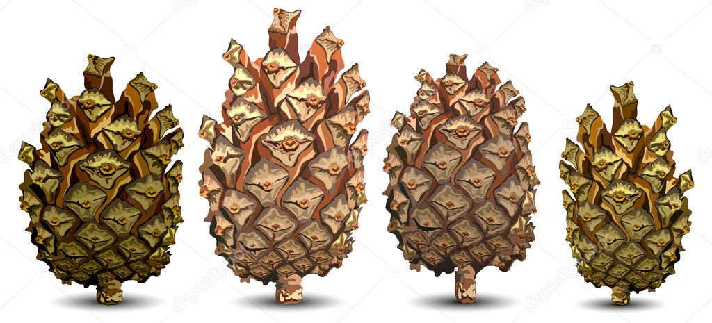 Four pine cones isolated on white background, vector illustration — Stock Vector #2768854