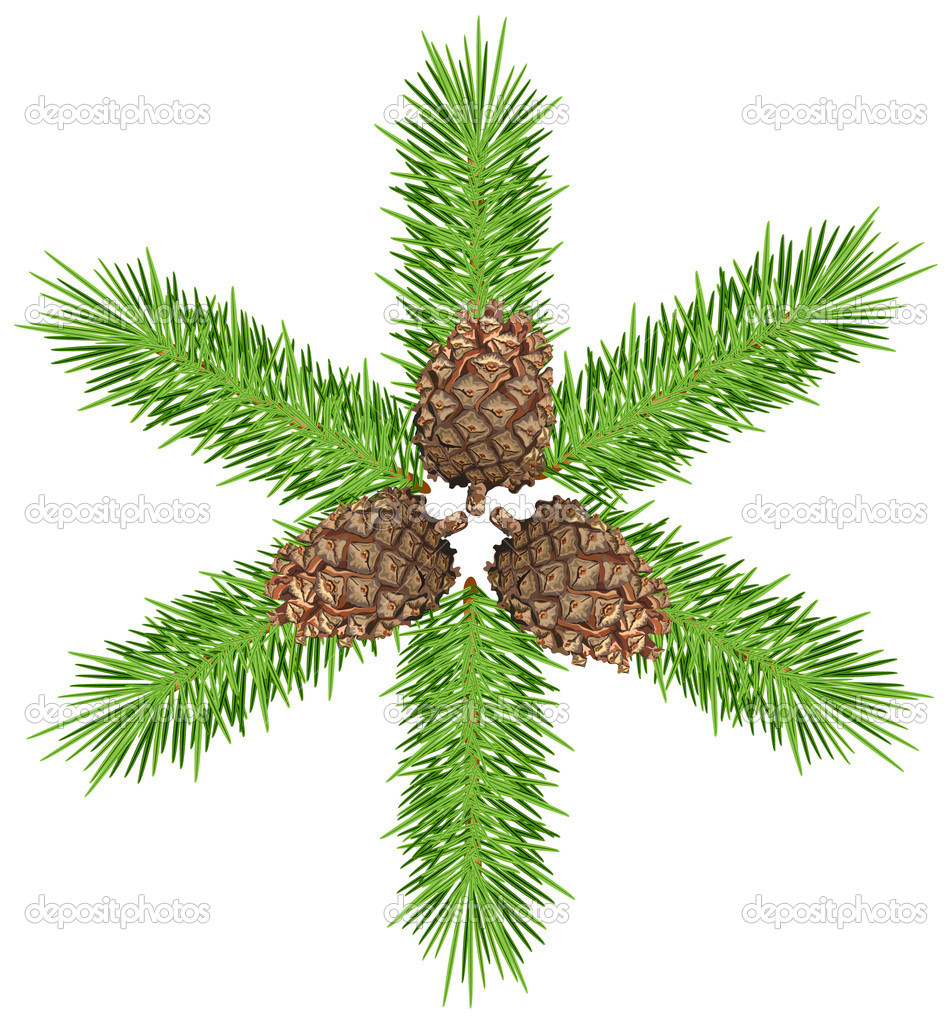 Three cones & green tree branch. Isolated object on white.  Stock Vector #2768893